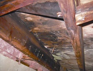 mold and rot in a Lowell crawl space