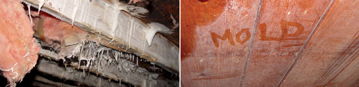 Home Mold in MA, including Lowell, Boston & Lynn.