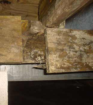 Extensive basement rot found in Cambridge by Basement Systems