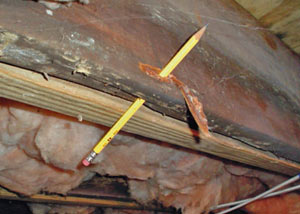 Destroyed crawl space structural wood in Woburn