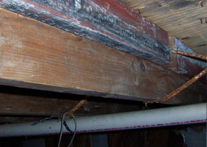 Rotting, decaying wood from mold damage in Gloucester